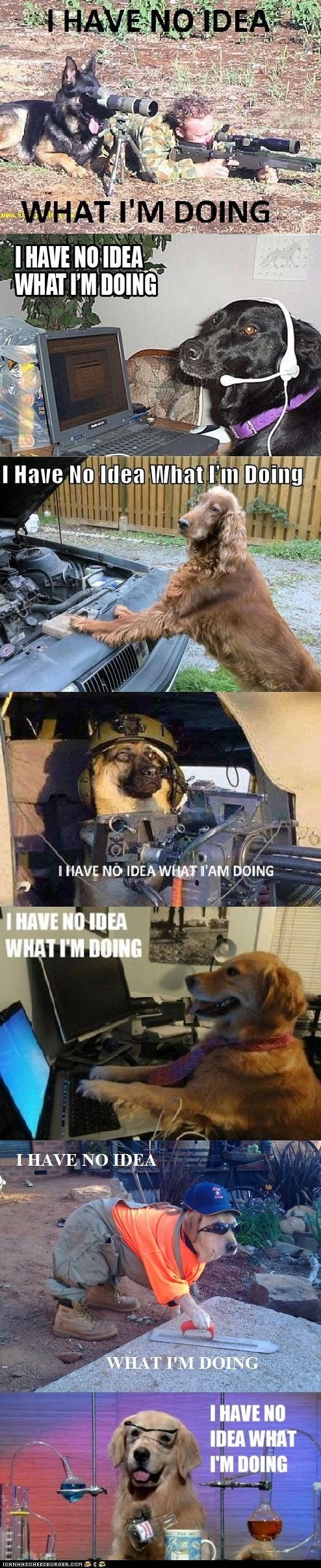 Dogs Don't Know Anything
