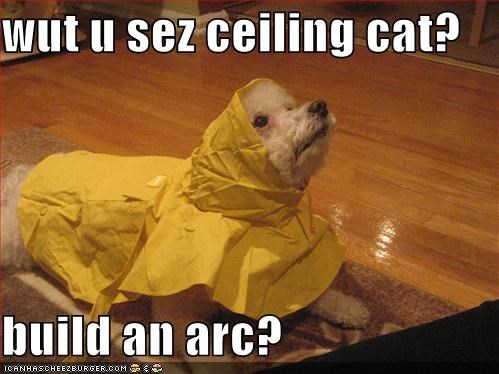 wut u sez ceiling cat?  build an arc?