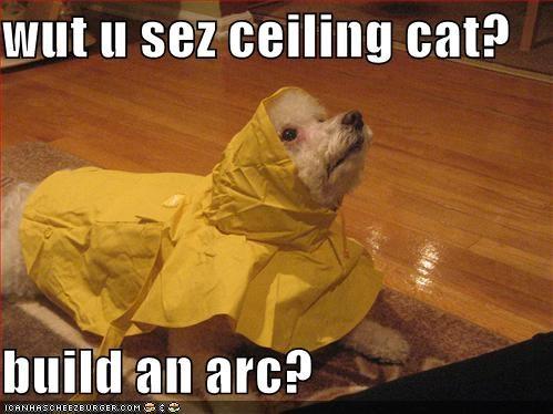 wut u sez ceiling cat?  build an arc?