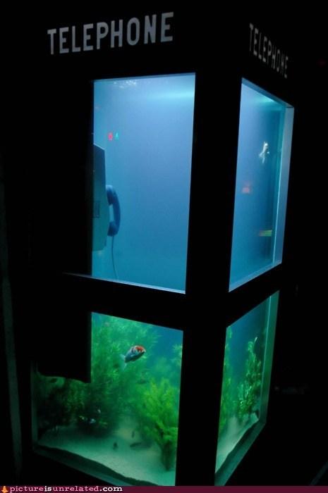 aquarium,fish,telephone booth