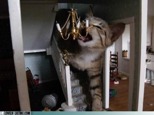 cat,dollhouse,giant,kitten,monster