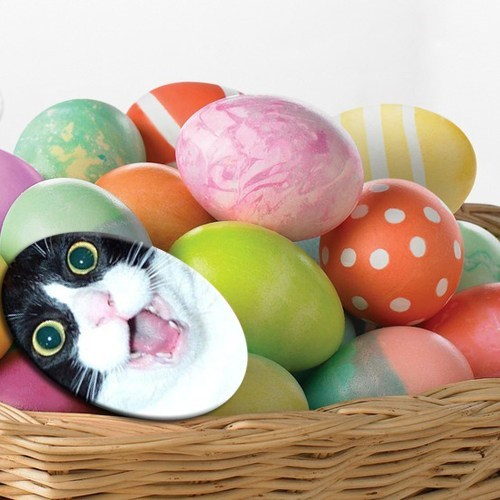 Congratulations!  You Found an Easter Egg!