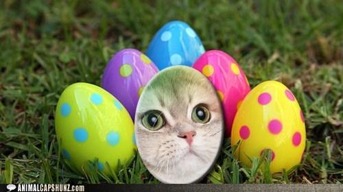 easter,eggs,ichc easter egg hunt