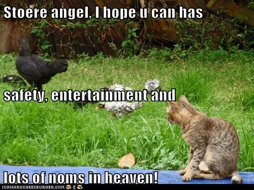 Stoere angel, I hope u can has safety, entertainment and lots of noms in heaven!