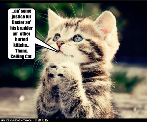 ...an' some justice fur Dexter an' his brudder an'  other hurted kittehs... Thanx, Ceiling Cat.