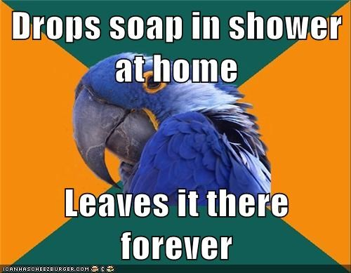 Paranoid Parrot: This Apartment is My Own Personal Prison