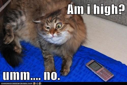 Am i high?  umm.... no.
