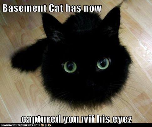 Basement Cat has now  captured you wif his eyez