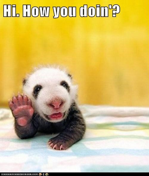 Excellent, Since I'm Looking at a Baby Panda