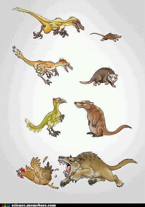 chicken,dinosaur,evolution,Life Sciences,mammal