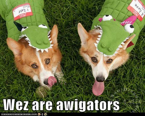 Wez are awigators