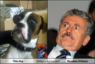 This Dog Totally Looks Like Massimo d'Alema