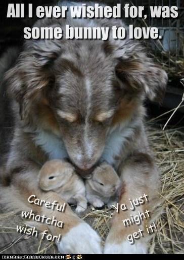 bunnies,dogs,love