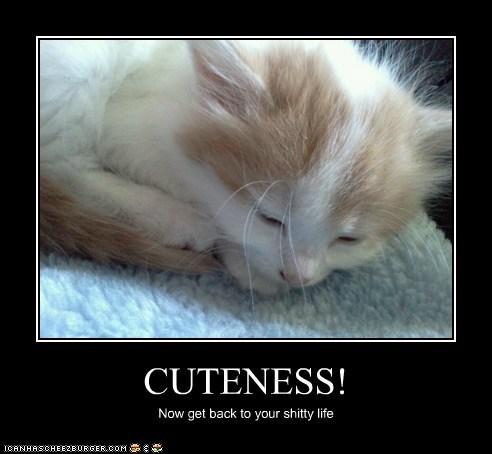CUTENESS!