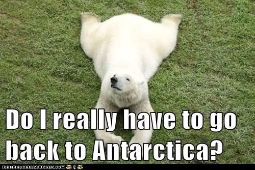 Do I really have to go back to Antarctica?