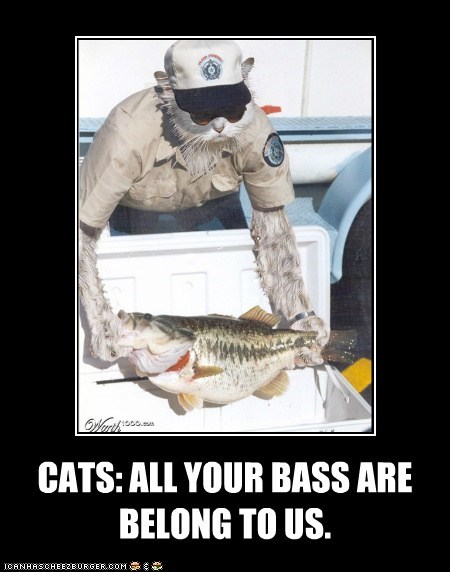 CATS: ALL YOUR BASS ARE BELONG TO US.
