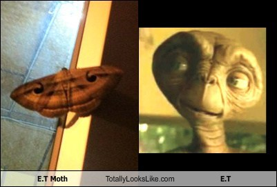 E.T Moth Totally Looks Like E.T