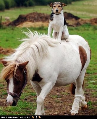 Goggie ob teh Week: My Mighty Steed!