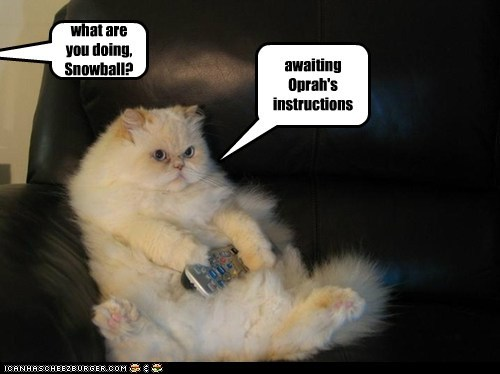 what are you doing, Snowball?