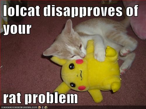 lolcat disapproves of your  rat problem