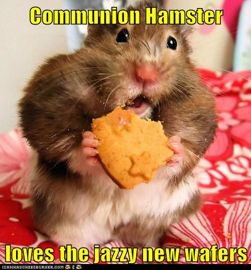 Communion Hamster  loves the jazzy new wafers