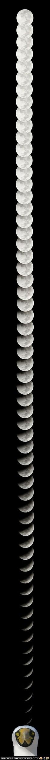 birds,long,moon,moons,surprise,wtf