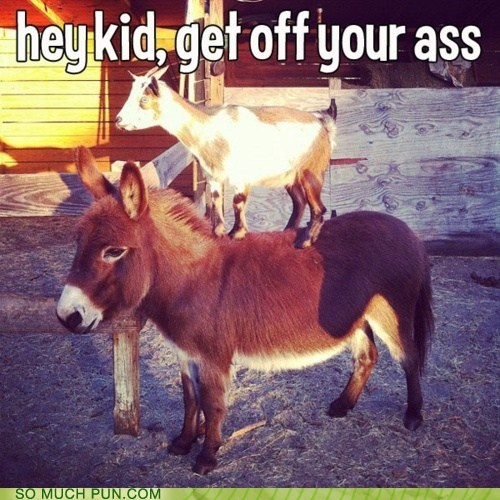 ass,baby,donkey,double meaning,goat,Hall of Fame,kid,literalism