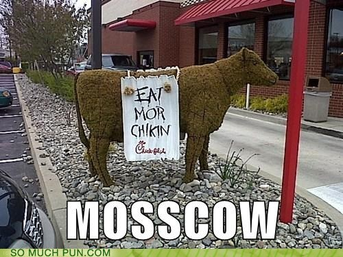 cow,double meaning,homophone,homophones,literalism,Moscow,moss
