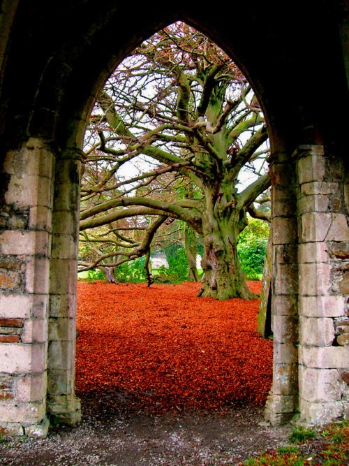 arch,autumn,Hall of Fame,trees,whales