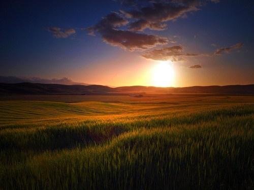 california,field,sunrise,valley