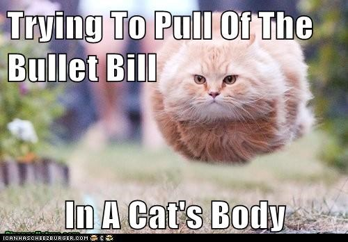 Trying To Pull Of The Bullet Bill  In A Cat's Body