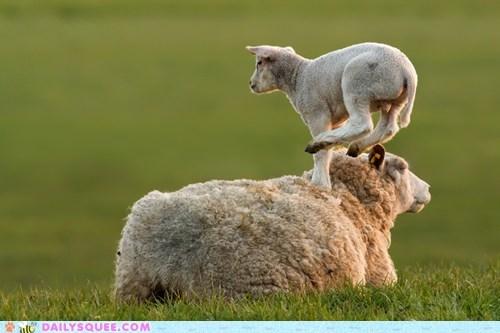 baby,hop,lamb,mom,mothers day,sheep