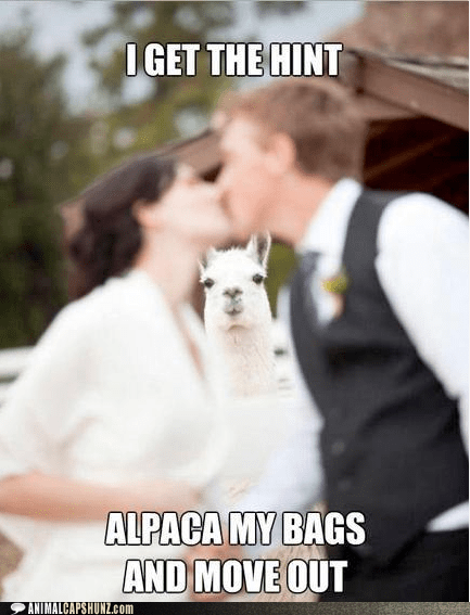 alpaca,alpacas,crowd,hint,i get it,kissing,move out,puns,wedding
