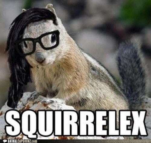 dubstep,glasses,Music,photoshop,photoshopped,puns,skrillex,squirrel,squirrels