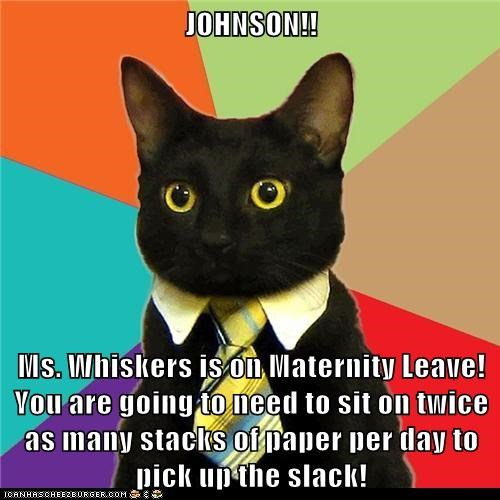 Animal Memes: Business Cat - We Can't Let the Humans Get Any Work Done