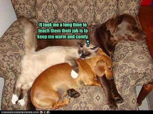 cold,dogs,lolcat,master,servant,serve,warm