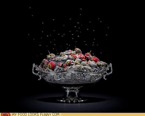 fruit flies,moldy,rotten,strawberries