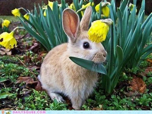 bunny,daffodil,eat,flowers,greens
