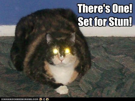 cat,danger,gun,kill,lolcat,sci fi,shoot,Star Trek,stun