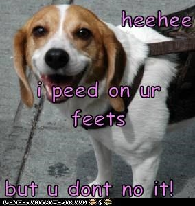 heehee i peed on ur feets but u dont no it!