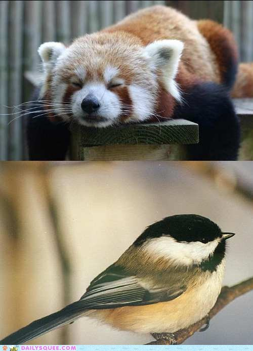 Squee Spree: Fuzz vs. Feathers