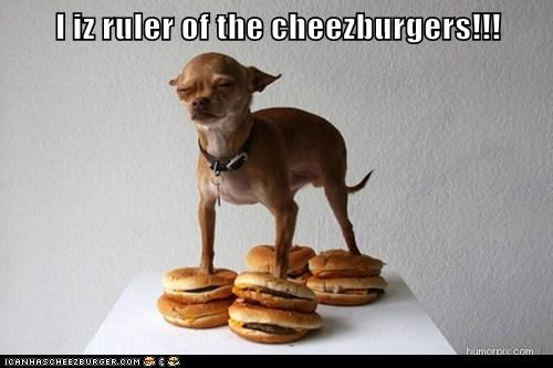 I iz ruler of the cheezburgers!!!