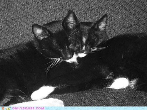 Reader Squees: Let Sleeping Cats Lie