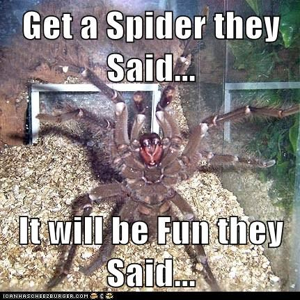 Get a Spider they Said...  It will be Fun they Said...