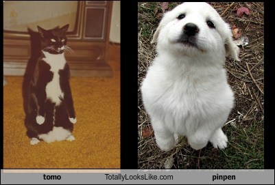tomo Totally Looks Like pinpen