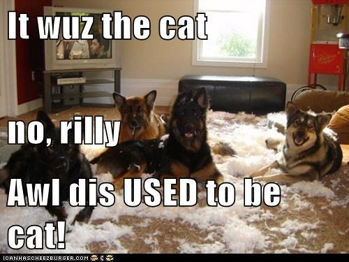 It wuz the cat no, rilly Awl dis USED to be cat!