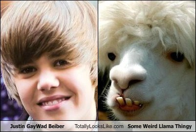 Justin GayWad Beiber Totally Looks Like Some Weird Llama Thingy
