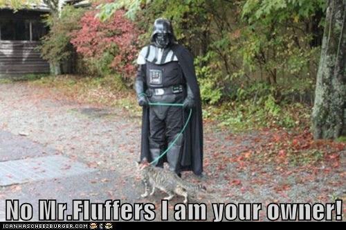 cat,darth vader,fluff,i am your father,owner,Star Trek