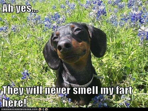 best of the week,daschund,dogs,fart,farting,farts,flowers,Hall of Fame,never