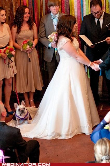 bride,dogs,funny wedding photos,wedding dress